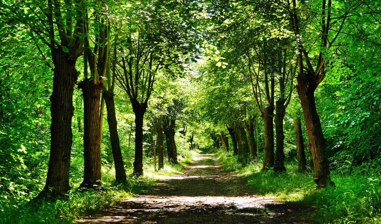 деревя, природа, дорога, украшения, тропинка, фона, красивые, путь, park, лес,