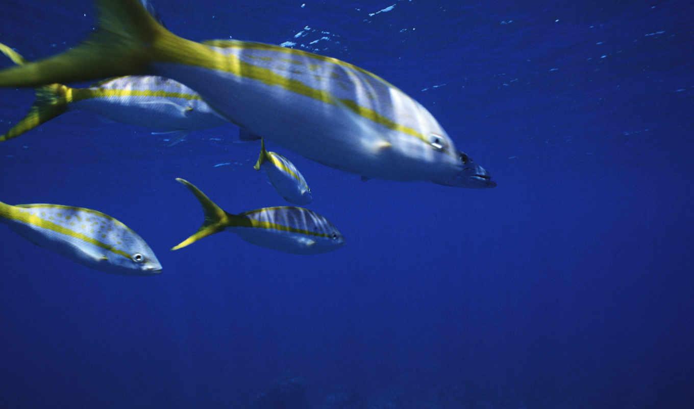 white, water, fish, yellow, тоби,