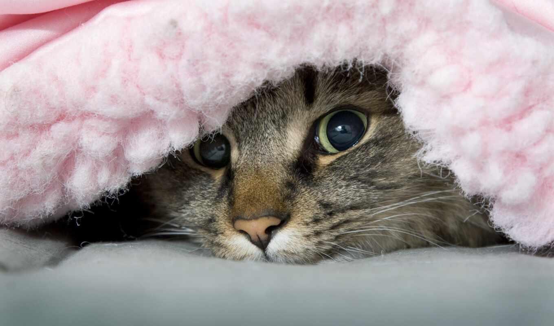 кот, одеяло, под, ozornik, peep, red, erotica, cover, создать