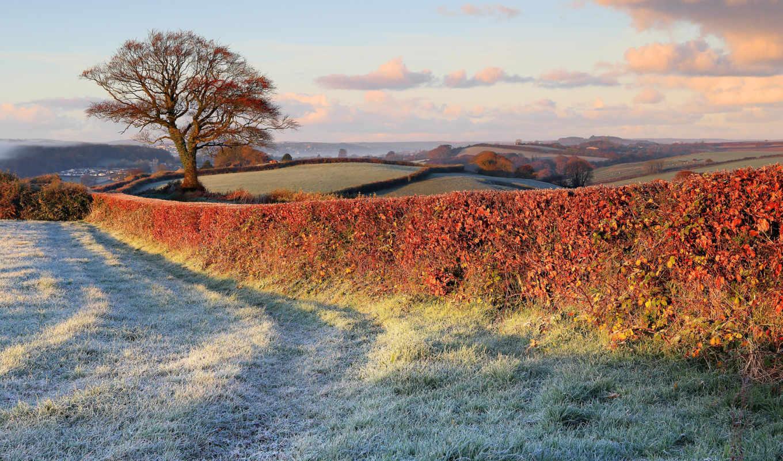 поздняя, осень, природа, иней, поля, дерево, газон, забор,