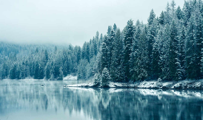 канада, британская, colombia, лес, west, vancouver, дома, утро, winter,