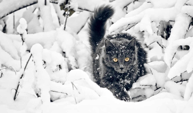 winter, снег, кот, высоком, кошки,