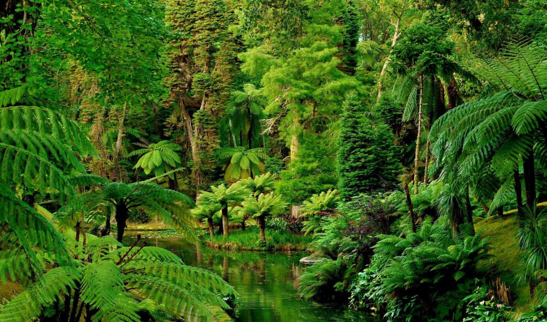 тропики, природа, сады, португалия, botanical, картинка, furnas, леса,