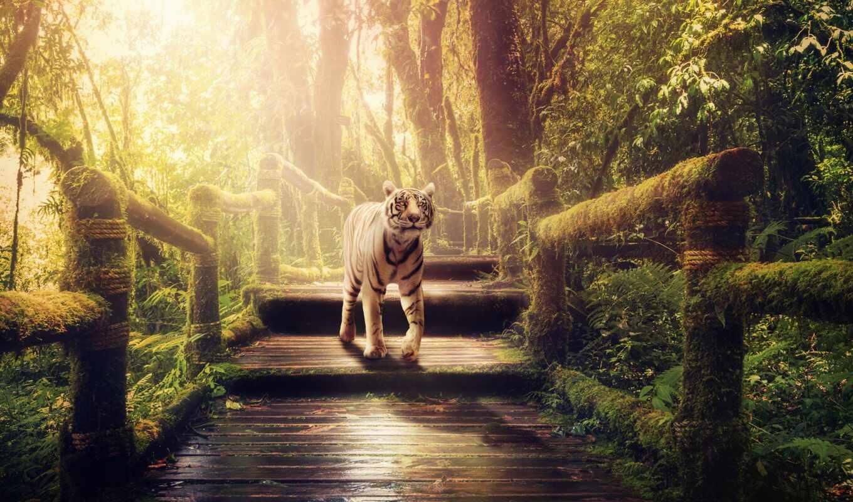 джунгли, тигр, белый, devushka, зелень, voronezhskii, октябрь, джейсон, les, mejia, дождь