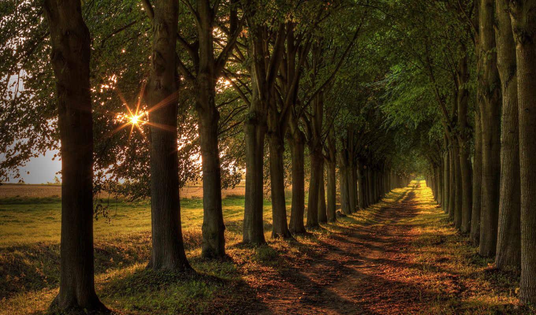деревья, дорога, пейзаж, свет, закат,
