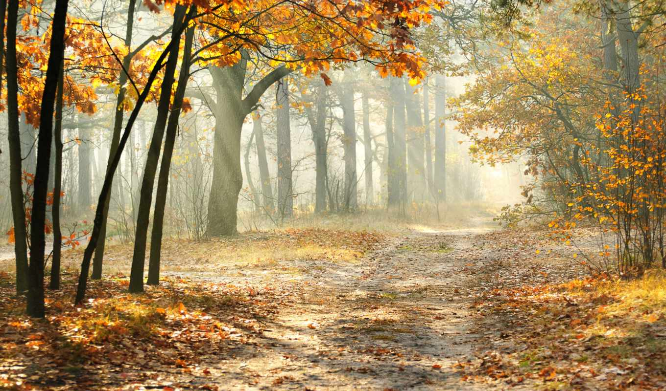 autumn, forest, nature, resolution,