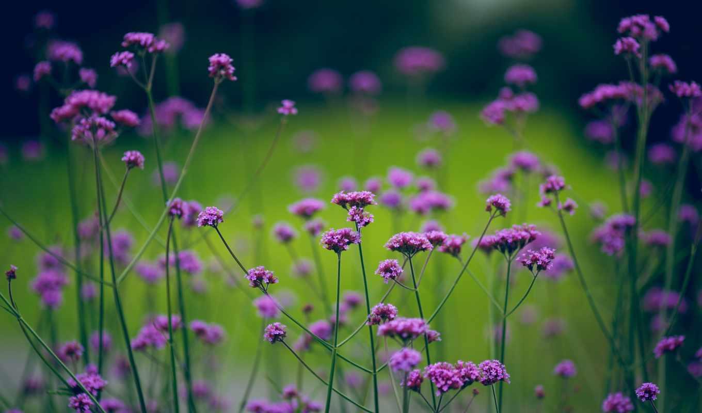 природа, цветы, зелёный, растительность, размытость,
