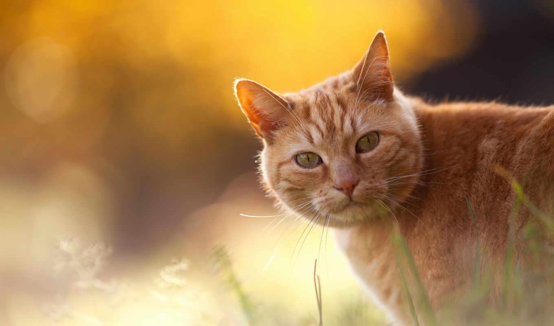 red, кот, траве, разных,