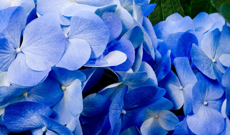 flowers, tutfon, фиалки,