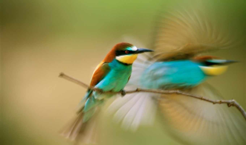 ,птица,ветка,взмах,