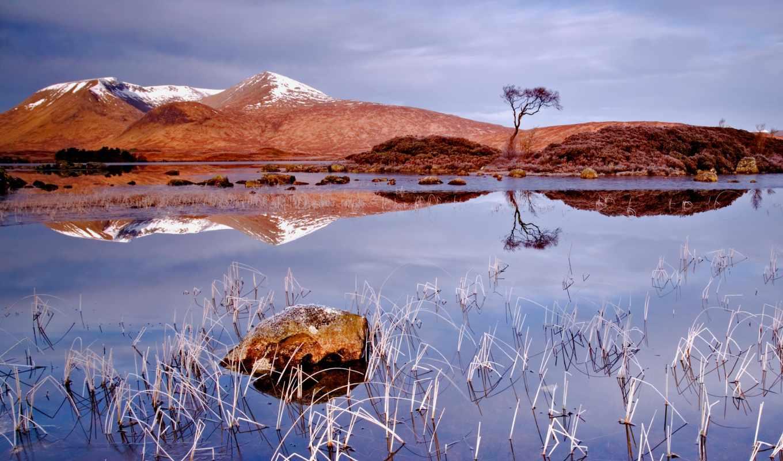 осень, озеро, landscape, пасмурно, отражение, дерево,