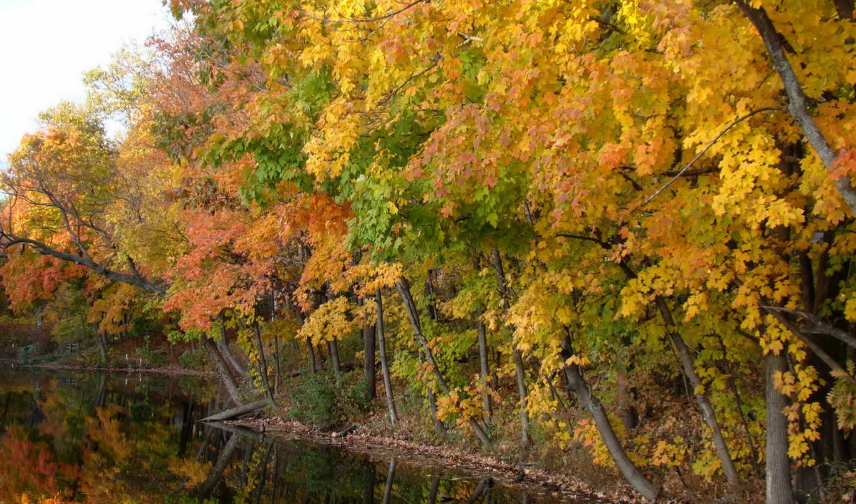 года, времена, znajdziesz, lepszą, категории, ponad, природа, tapet, картинка, tapetami, осень,