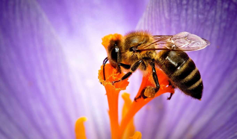 пчелка, subscribe, цветы, ultra, webimagesvideom, collections, share, опыление, коллекциях,