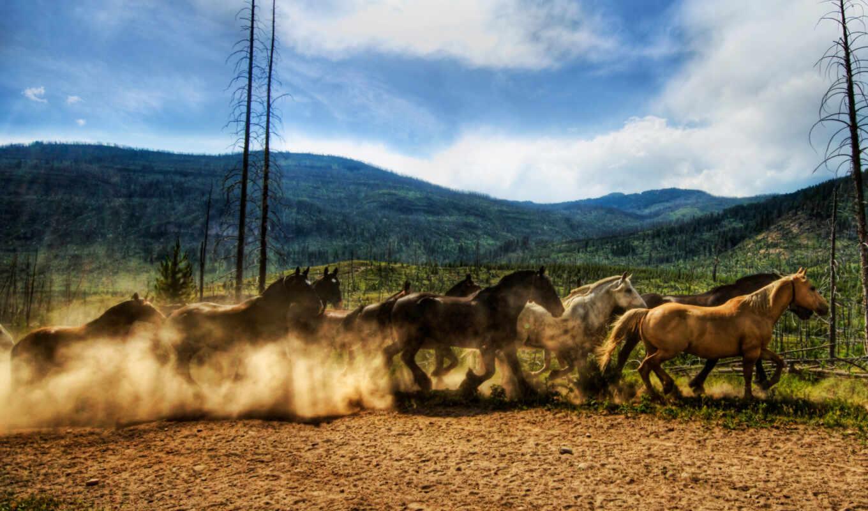лошадь, табун, caballo, пыль, mobile, smartphone, running, pantalla, бежать