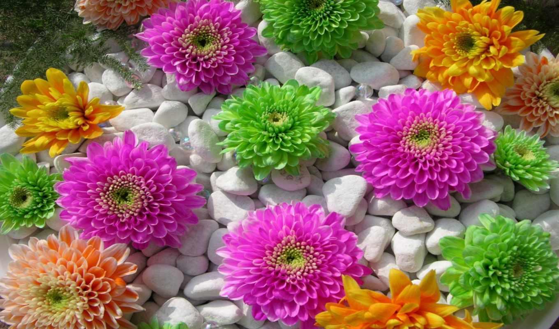 цветы, красивые, красивых, часть, flowers,