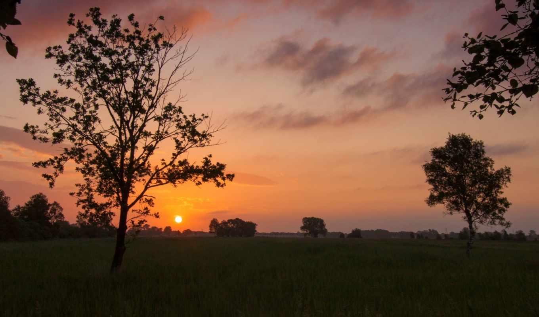 природа, красивые, деревья, фотографии, заставки, широкоформатные, landscape, дерево,
