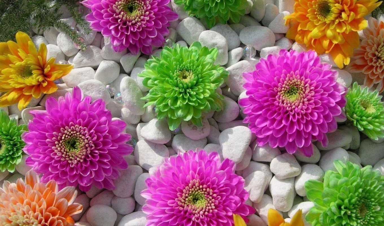 цветы, пост, страница, красивый, цветочное, галька,