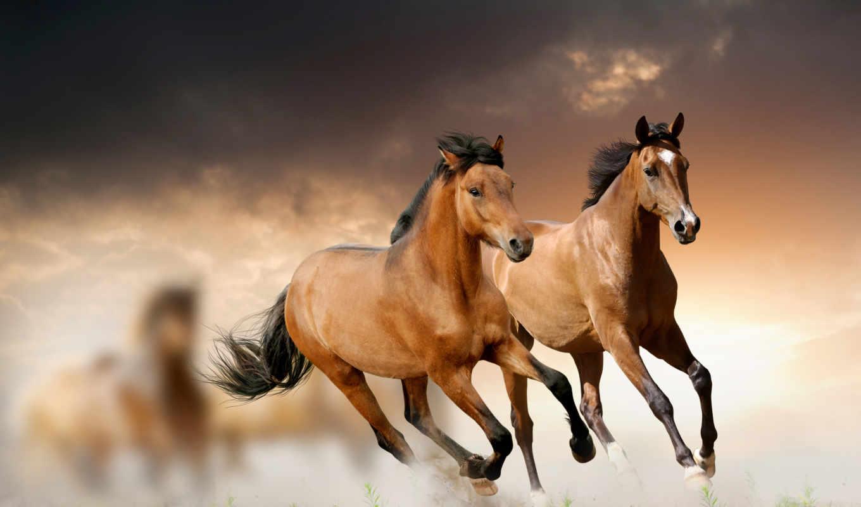 лошади, лошадей, лошадь,