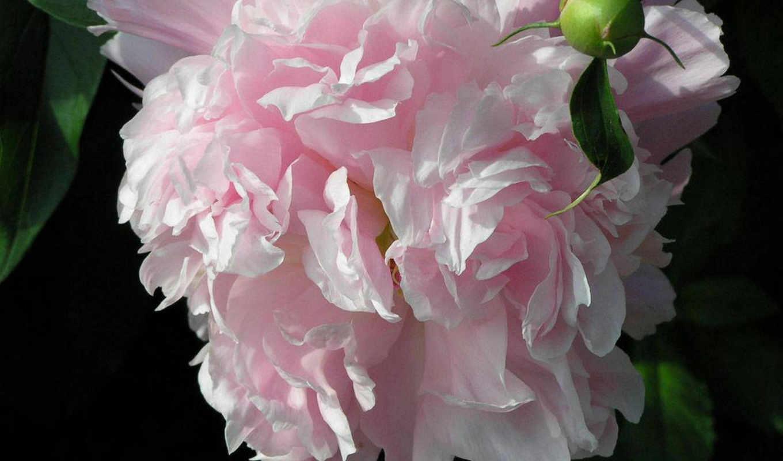 artfotki, cvety, url,