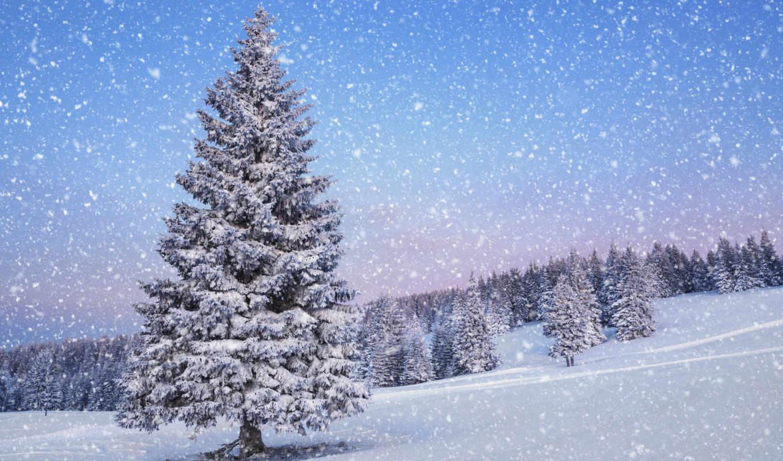 природа, снег, winter, дерево, landscape, елки, деревья, есть,