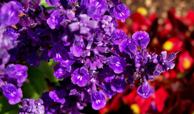 flowers, цветы, purple, ни, garden, soul,