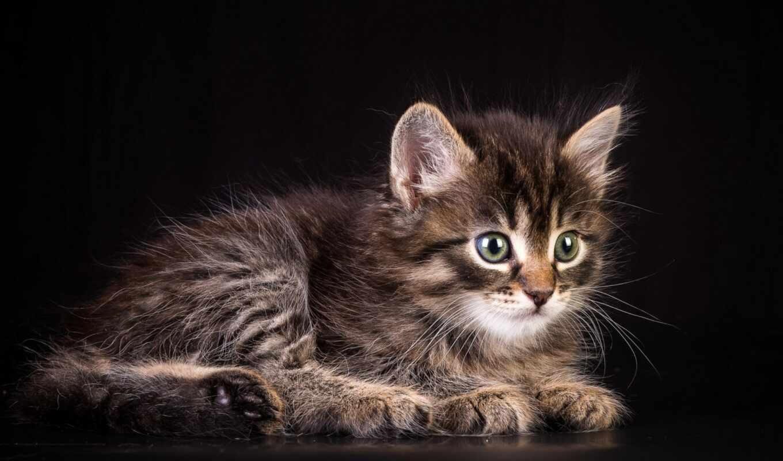 котенок, пушистый, кот, animal, песочница, see, анимация, game