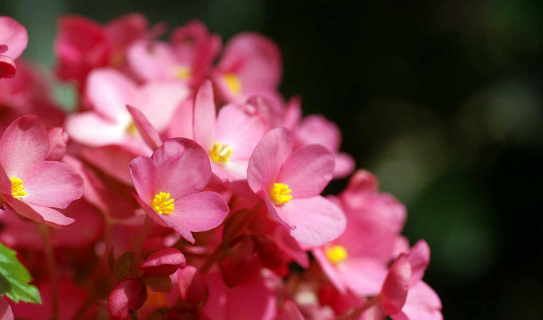 цветы, графика, категория, best, flowers,