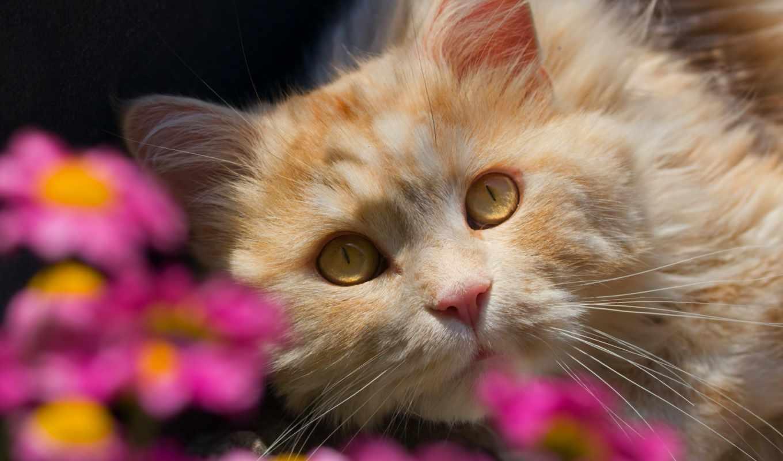 кошки, коты, питомник, бесплатные, jersey, vsemayki, страница, купить, футболки,