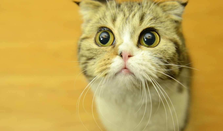 кот, картин, прикол, глаза, усы, кошки,