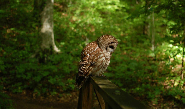 взгляд, страница, дерево, сова, хищник, птица,