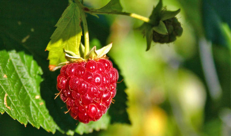 , oriflame, raspberry, nature, secrets, puzzle, exfoliating,