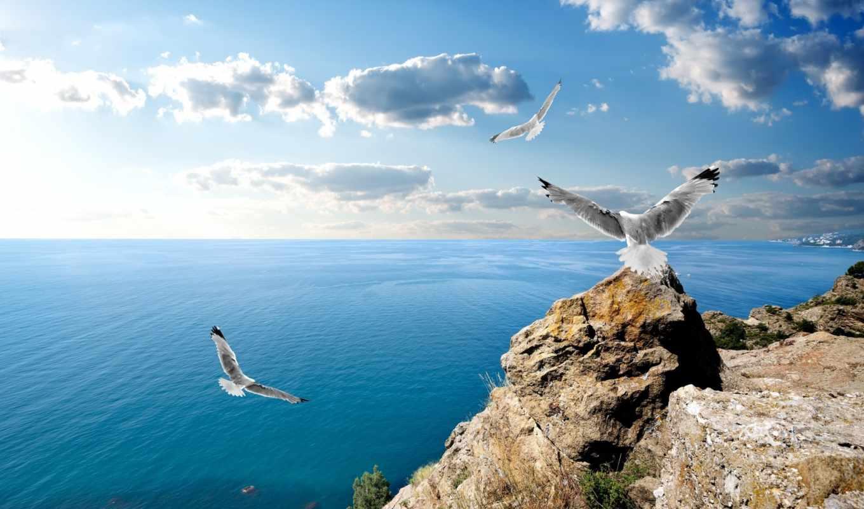 rybnitsa, free, животные, чайки, arservis, море, скалы,