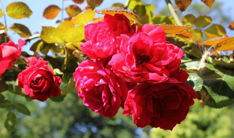 цветы, mine, нов, слабость, то, совсем, июня, incredible, только, означает, муж, если, беспричинно, решил, жене, give,