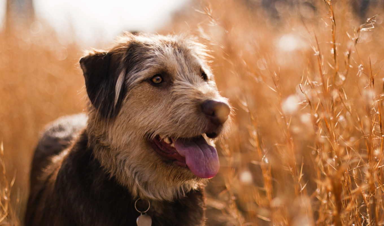 собака, поле, para, facebook, summer, взгляд, muro,