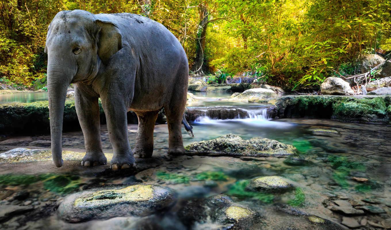 широкоформатные, лес, picture, красивыми, животными, слон, animals, река, thailand, милыми,