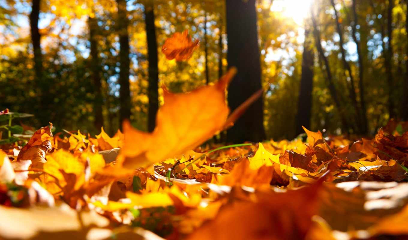 autumn, leaves, falling, ground, resolution, choose, description, download, above,