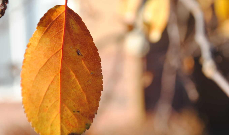 天凉好个秋摄影壁纸第三辑,
