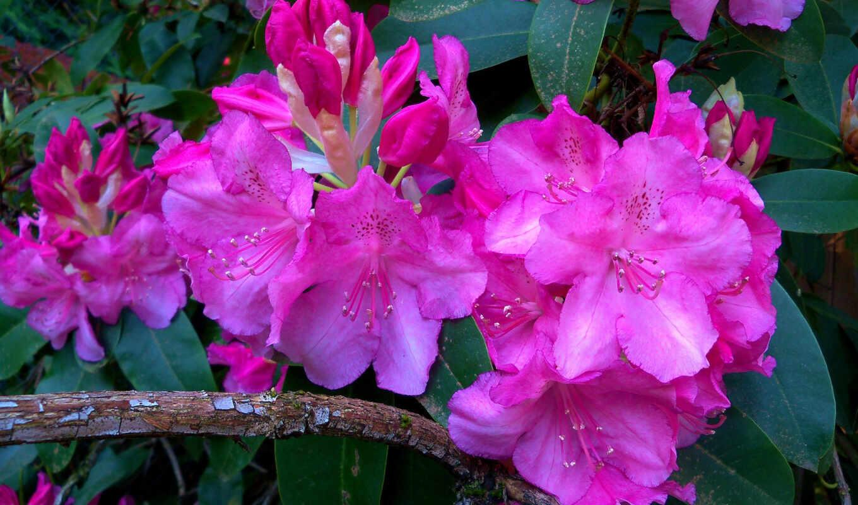 часть, цветы, прочитать, arnusha, целикомв, сообщения, цитатник, community, цитата, свой,