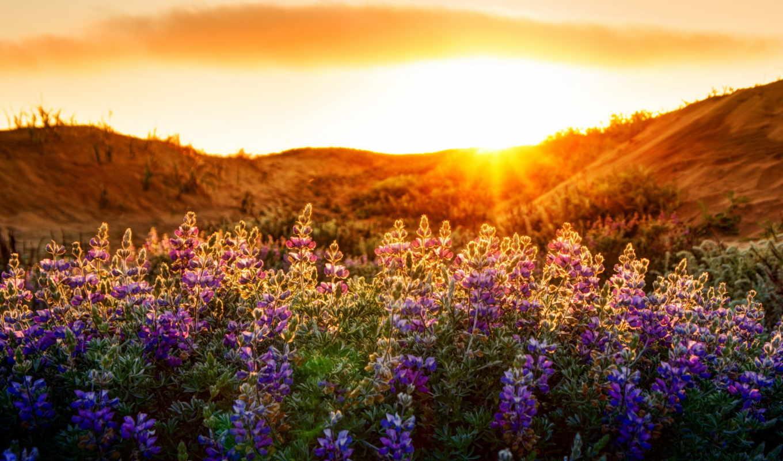 цветы, природа, landscape, свет,