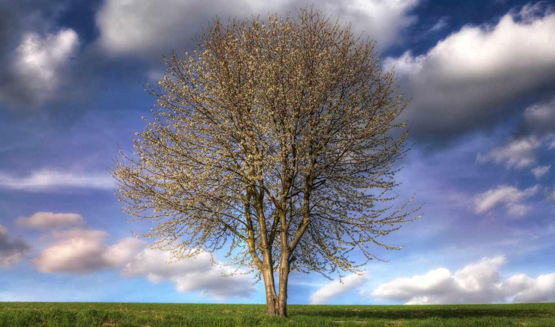 природа, весна, color, небо, поле, дерево, деревя, яблоня,