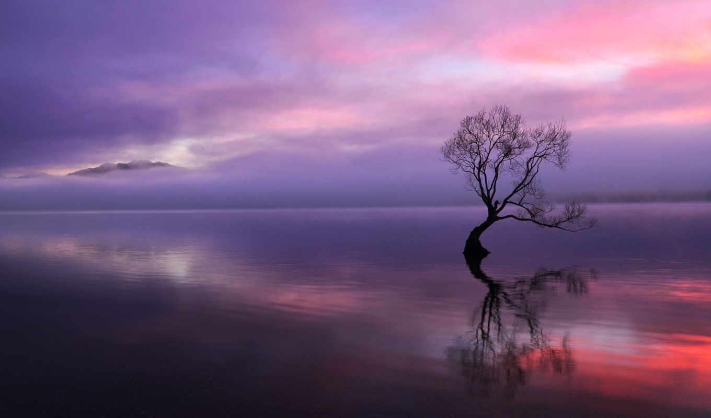 дерево, закат, сухое, озеро, вечер, картинка, горы, облака,