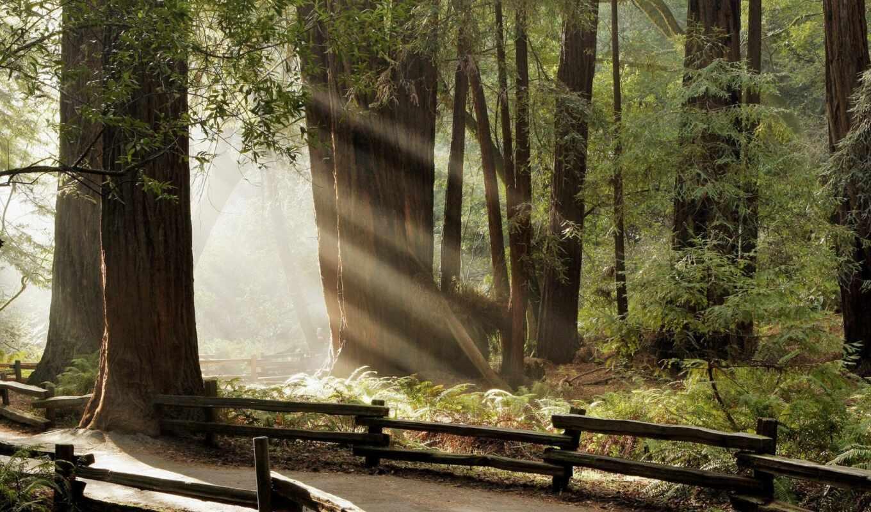 дорога, лесу, лес, деревя, весна,