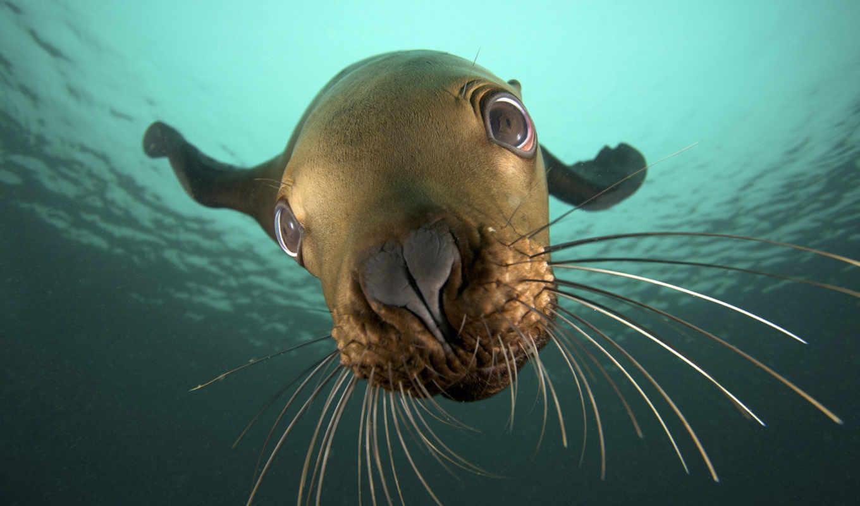 море, тюлень, марина, постеры, поставил, marino, лайков,