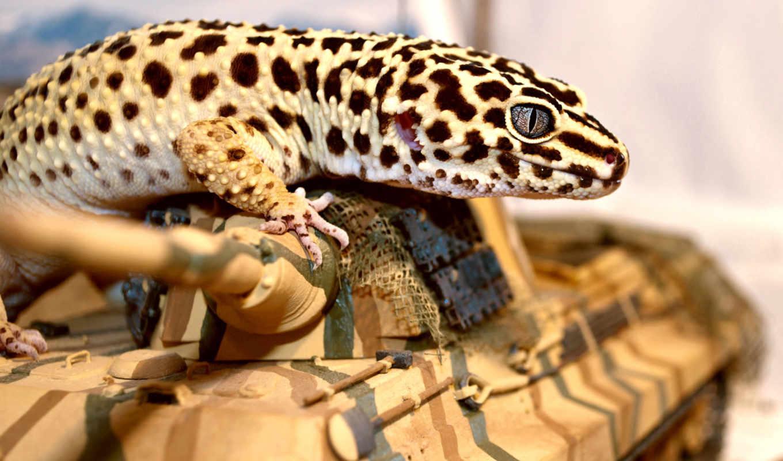 геккон, ящер, эублефар, танк, глаз,
