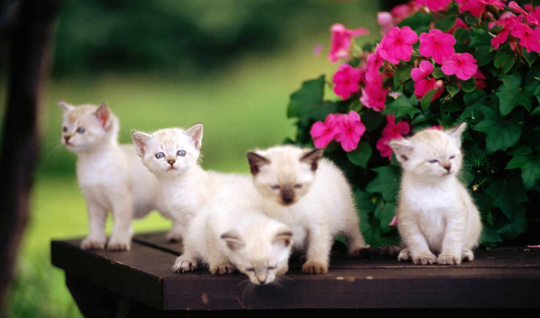 котята, обои, милые, малыши, маленькие, цветы, кот