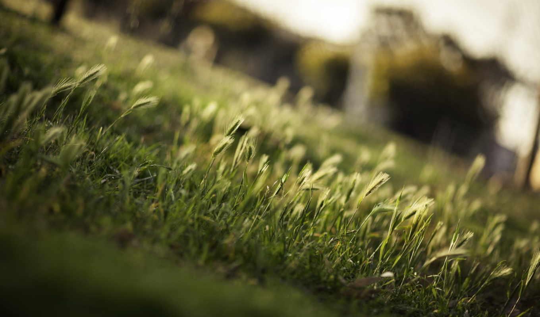 макро, природа, этом, без, трава, всяких, проблем,