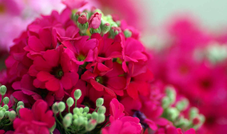 весна, цветы, весенние, красивые,