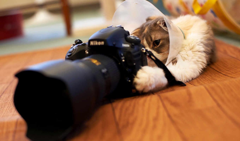 Фотоаппарат картинки прикольные, поздравление для