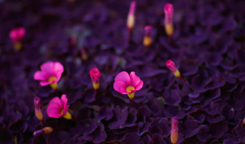 цветы, яркие, красота, картинку, картинка, flores, кликните,