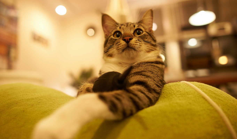 , кот, морда, удивление,
